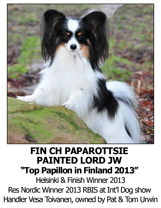 Best Dog Shampoo for Papillon, White Silky Dog